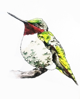 """""""Red and Green"""" 7.5"""" x 7"""" Ink and Watercolor Though quick and agile, hummingbirds also need to rest. Prints available: http://www.redbubble.com/people/rachelmartinart/works/15315520-red-and-green?ref=recent-owner"""